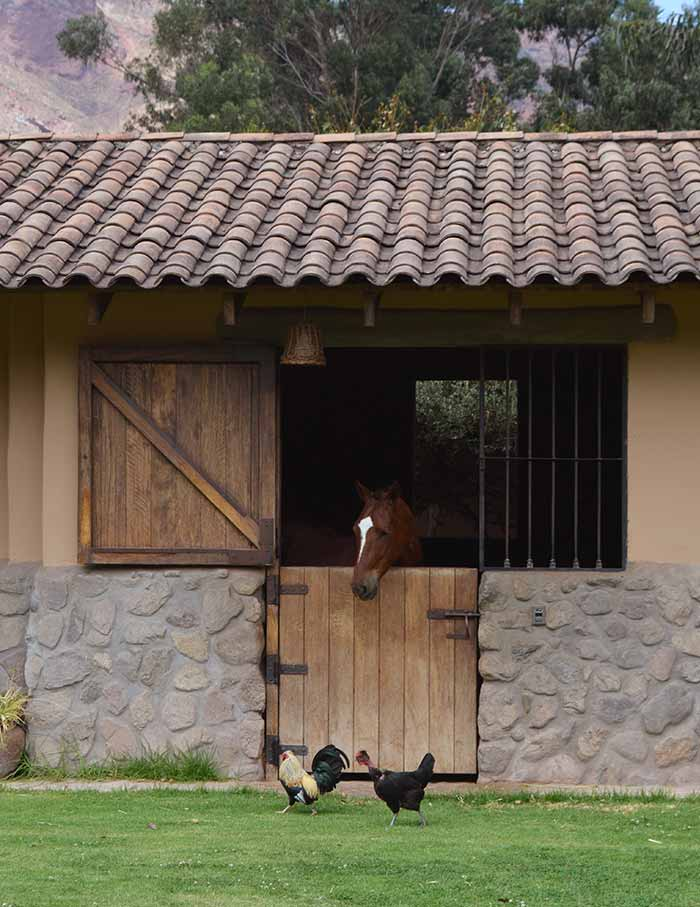 One horse at the stable of Sol y Luna Hotel and one cock and hen across the stable