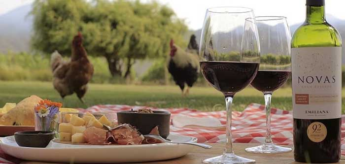 Santiago's Vineyards - A picnic served at the organic winery Emiliana - Casablanca Valley - Chile